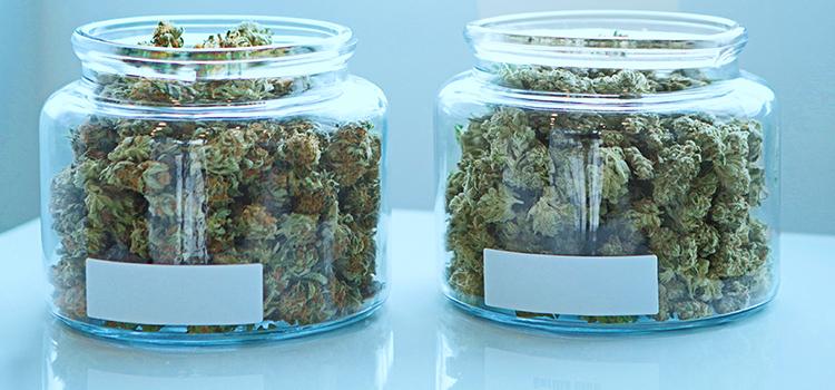 Expansion of NJ Medical Marijuana Program On Horizon