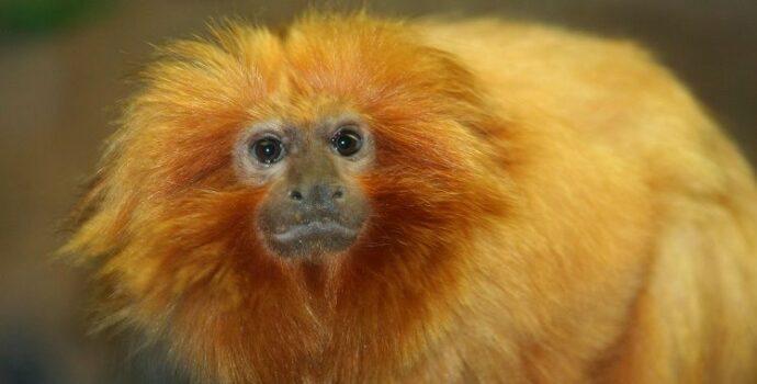 "Monkey Denied Copyright In A ""Selfie"""
