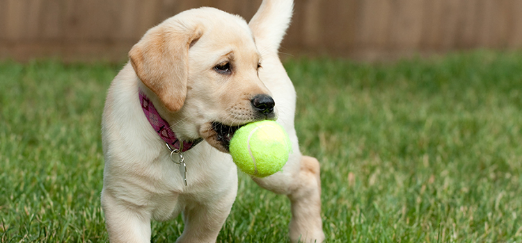 What Pet Parents Need to Know about Pet Ownership Disputes