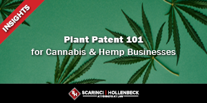 Plant Patent 101 for Cannabis and Hemp Businesses